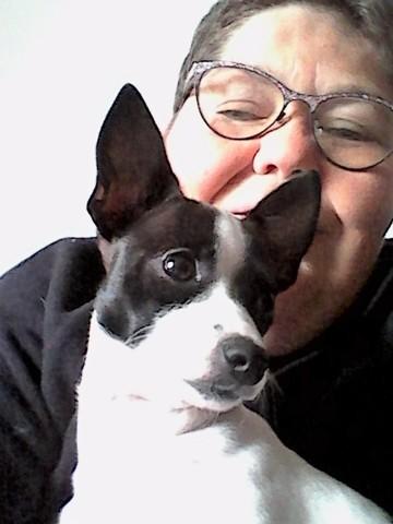 Milou, chien Chihuahua