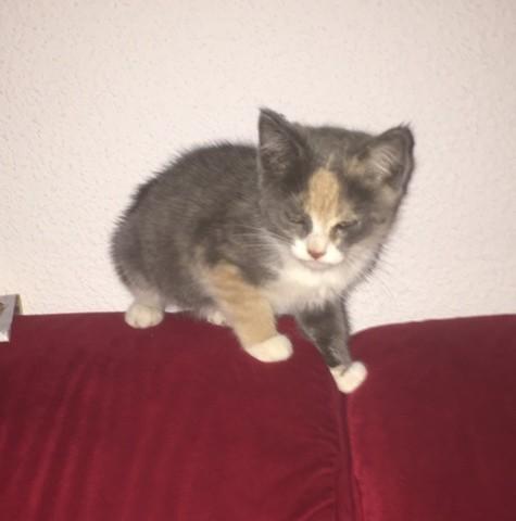 Mimine, chaton