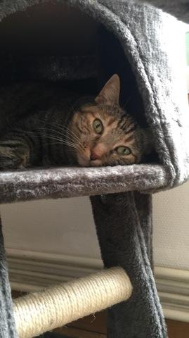 Minimi, chat Gouttière