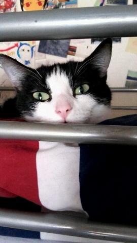 Minimoys, chat Gouttière