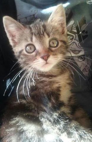 Minnie, chaton