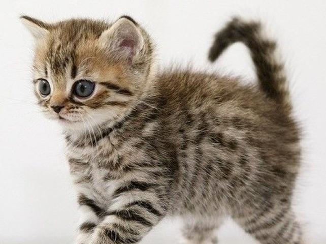 Minoucha, chaton