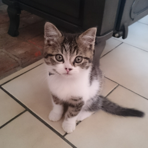 Mio, chaton Gouttière