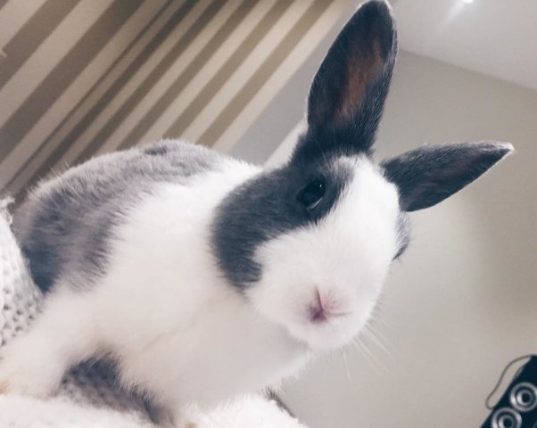 Miss Bunny, rongeur Lapin