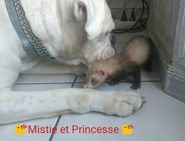 Mistie, autres