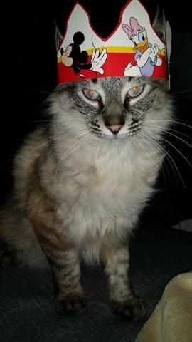 Mistigrou, chat Gouttière