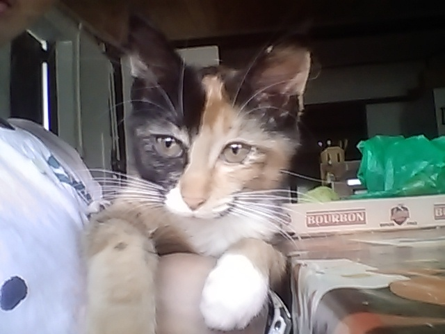 Misty, chaton Gouttière