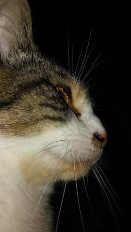 Mitoune, chat Gouttière