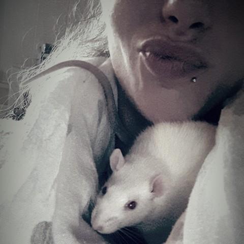 Mojitos, rongeur Rat