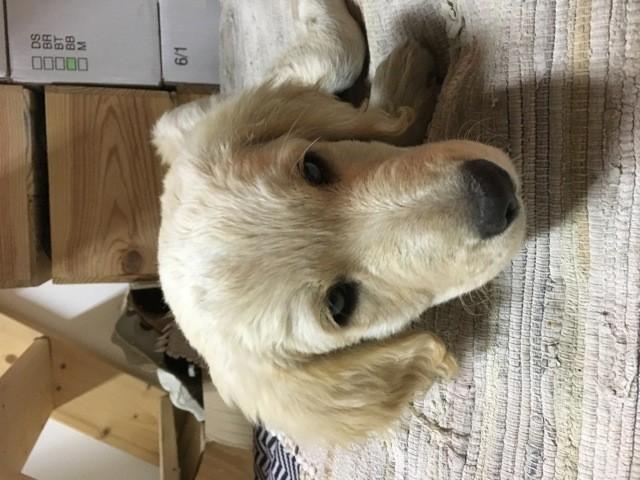 Mojo, chien