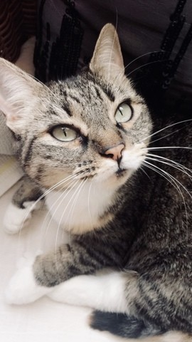 Moumine, chat