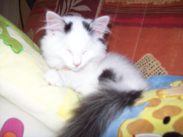 Moumousse, chat Gouttière