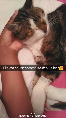 Mousse, chat Gouttière