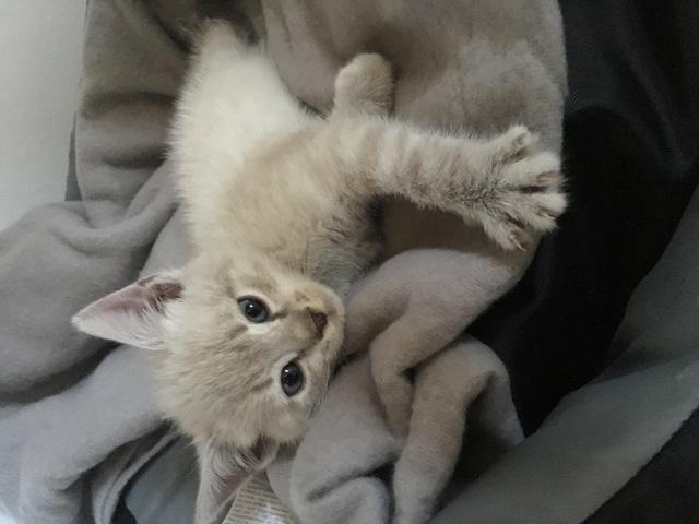 Mya, chaton