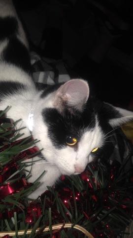 Nala, chaton Gouttière