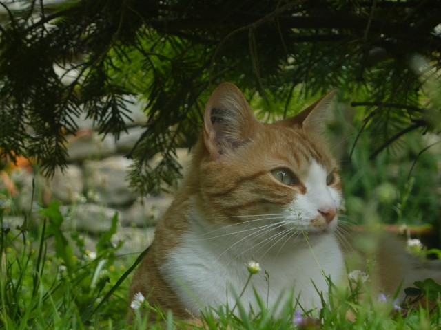 Nanouk, chat Gouttière