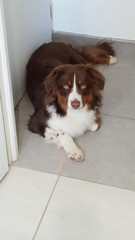 Nesko, chien