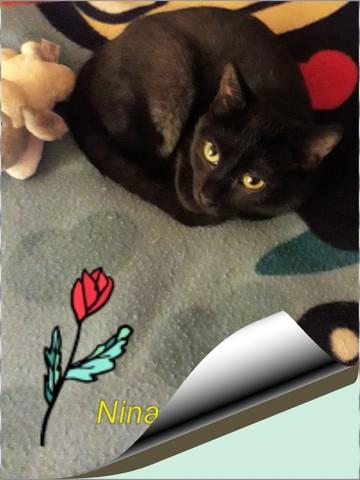 Nina, chaton