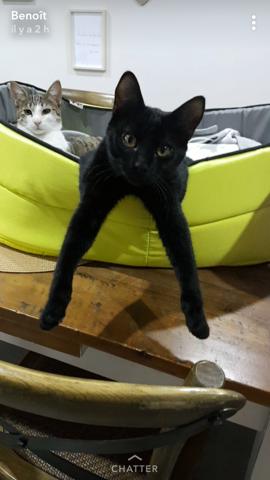 Njord, chat Gouttière