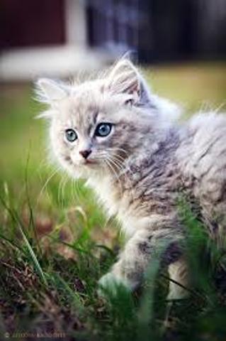 Noufie, chat