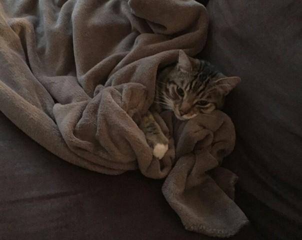 Oddy, chat Gouttière