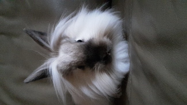Olaf, rongeur Lapin