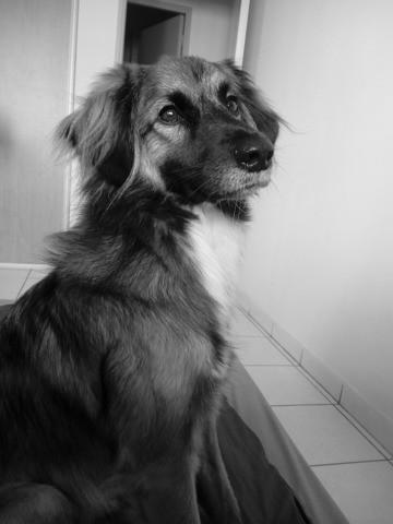 Ona, chien