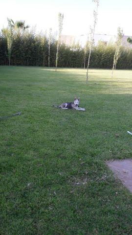 Owen, chien