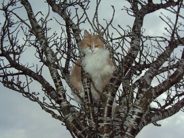P'Titi Loup, chat