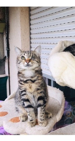 Pablo, chaton