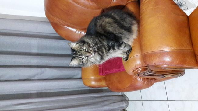 Pantoufle, chat