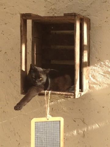 Penelope, chat Gouttière