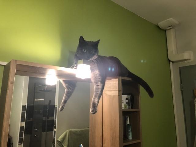 Pesto, chaton