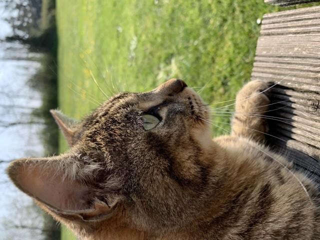 Petit-Filou, chat Gouttière