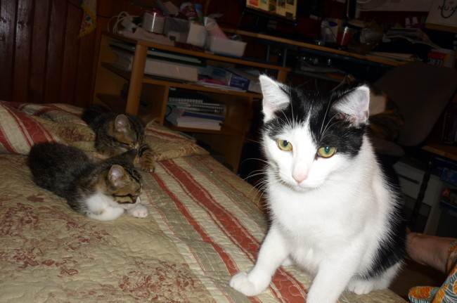 Petite Plume, chaton Gouttière