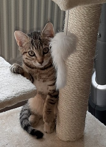 Pivoine, chaton