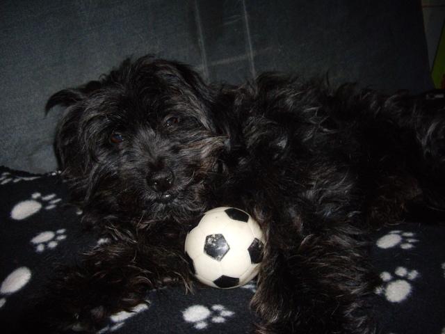 Popeye, chien