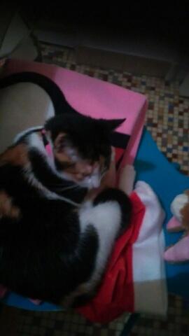 Princesse, chaton