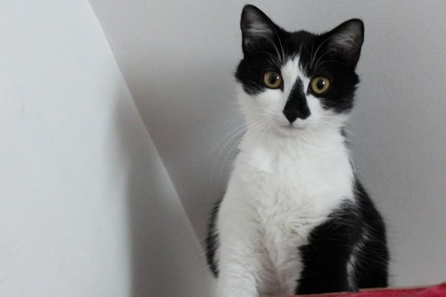 Rabougrie, chat Gouttière