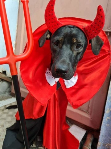 Rocket, chien