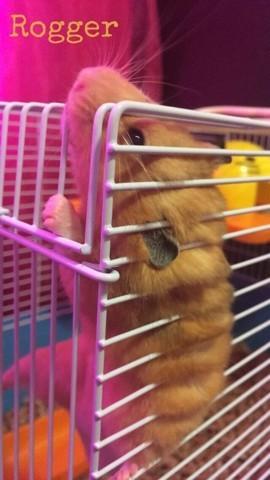 Rogger, rongeur Hamster