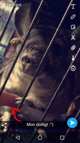 Kiwi, rongeur