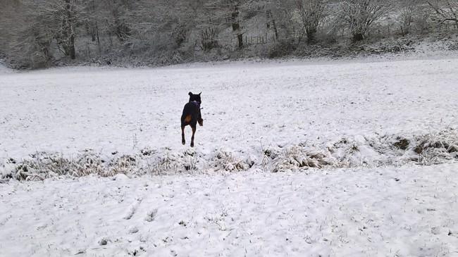 Témis, chien Rottweiler