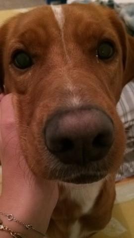Roxie, chien