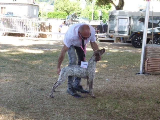 Rufnit Libbie, chien Braque du Bourbonnais