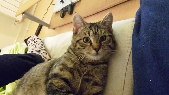 Sangha, chaton Gouttière