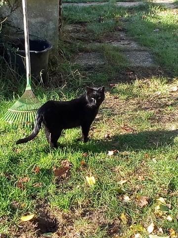 Satan, chat Gouttière