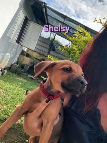 Shelsy