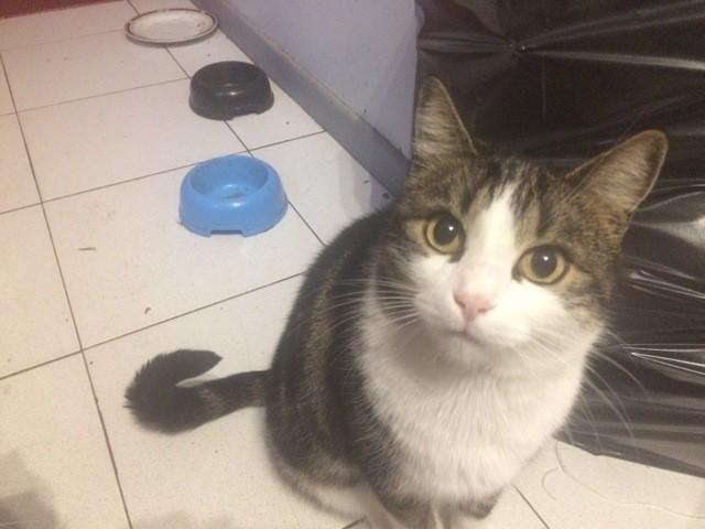 Siri, chat Gouttière