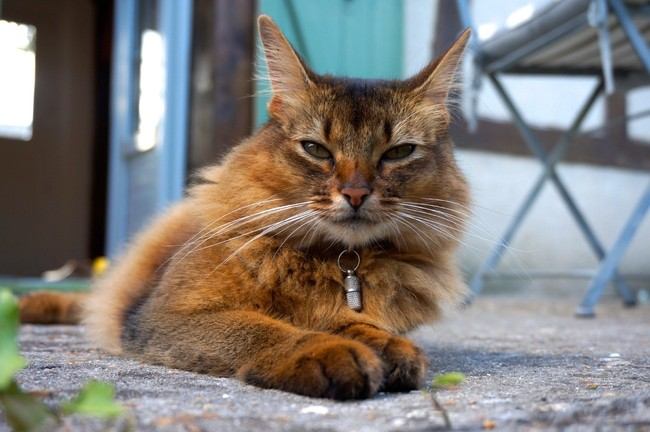 somali chat match  plus